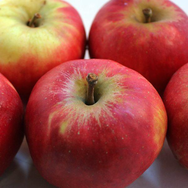 Appels, elstar