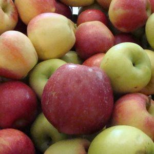 BIO Appels , nieuwe oogst