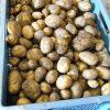 Aardappelen, nieuwe oogst
